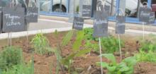 Jardin Aromates Printemps