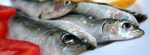 La sardine à l'honneur pour ce concours de cuisine